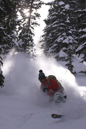 skiing through trees